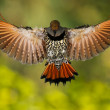 Hawk Predator — Stockfoto