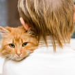 Cats with Owner — Stock Photo