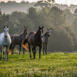 Four Horse Back — Stock Photo