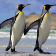 Pair of Penguins — Stock Photo