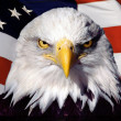 Bald Eagle and American Flag — Stock Photo
