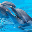 Dolphins Couple Swimming — Stock Photo