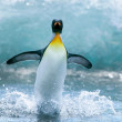 Penguin in Antarctica — Stockfoto