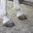 Feet horse hoof — Stock Photo