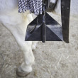 Stock Photo: Horse Stirrup