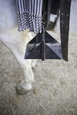 Horse Stirrup — Stock Photo