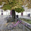 Bikes on campus — Foto Stock
