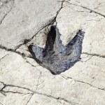 Постер, плакат: Fossilized dinosaur footprint