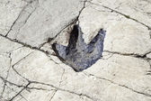 Fossilized dinosaur footprint — Stock Photo