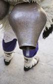 Çıngırak yaşlı inek — Stok fotoğraf