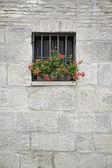 Fenêtre avec fleurs — Photo