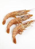 Fresh prawns — Stock Photo