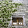 Window with rural grass — Stock Photo #27913891