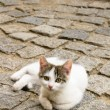 Stock Photo: Cat on pavement