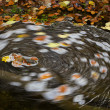 Stock Photo: Whirlpool