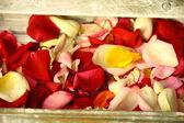Colored petals — Stock Photo