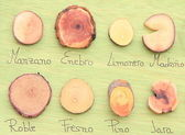 Wood samples — Stock Photo