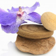 Stock Photo: Orchid over yellowish stones