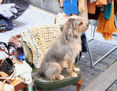 Dog in the market — Stock Photo