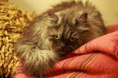 My little cat — Stock Photo