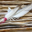 Sticks and feathers — Stock Photo