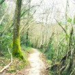 Forest Road.   Photographs with soft effect   — Stock Photo