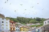 Seagulls on Cudillero — Stock Photo