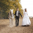 Newly-married couple and white horse — Foto Stock #12658426