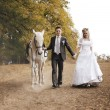 Newly-married couple and white horse — Stock Photo
