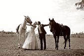 Newly-married couple near black and white horses — Stock Photo