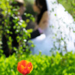 Groom and Bride in a park. wedding dress. — Stock Photo