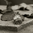 Rose and wedding rings  — Stockfoto