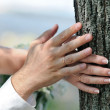 Bride and groom hands on trunk of tree close up — Stock Photo #22515067