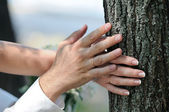Bride and groom hands on trunk of tree close up — Stock Photo