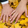 Stock Photo: Hands of newlywed on yellow leafs