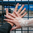 Hands of newlyweds with rings — Stock Photo