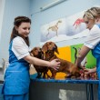 Veterinary clinic — Stock Photo #23208542