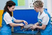 Veterinary clinic — Stock Photo