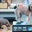 Little dog and cat at the veterinary checkup — Stock Photo