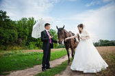 Young newly married couple walking with a horse — 图库照片