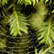 Spiderweb — Stock Photo #13336379
