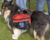 служебная собака — Стоковое фото