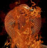 Flaming Cobra — Stock Photo