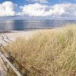 Coast of Darss, Germany — Stock Photo