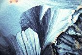 Microcrystals — Stock Photo