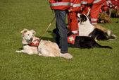 спасательная собака — Стоковое фото