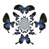 Kaleidoscopic Butterflies Illustration — Stock Photo