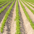 Agricultural Landscape in Germany — Stock Photo #23885653
