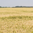 Agricultural Landscape in Germany — Stock Photo