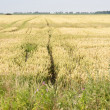 Agricultural Landscape in Germany — Stock Photo #23886481